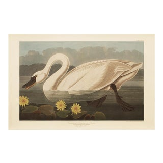 1990s American Swan by Audubon, Large Cottage Style Print For Sale