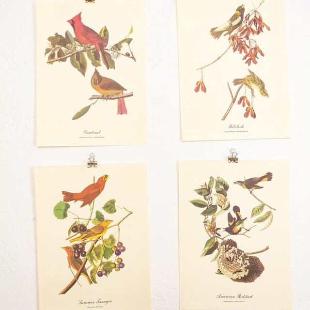 Paper 1960s Audubon Bird Prints | 17 Pc Gallery Collection For Sale - Image 7 of 13