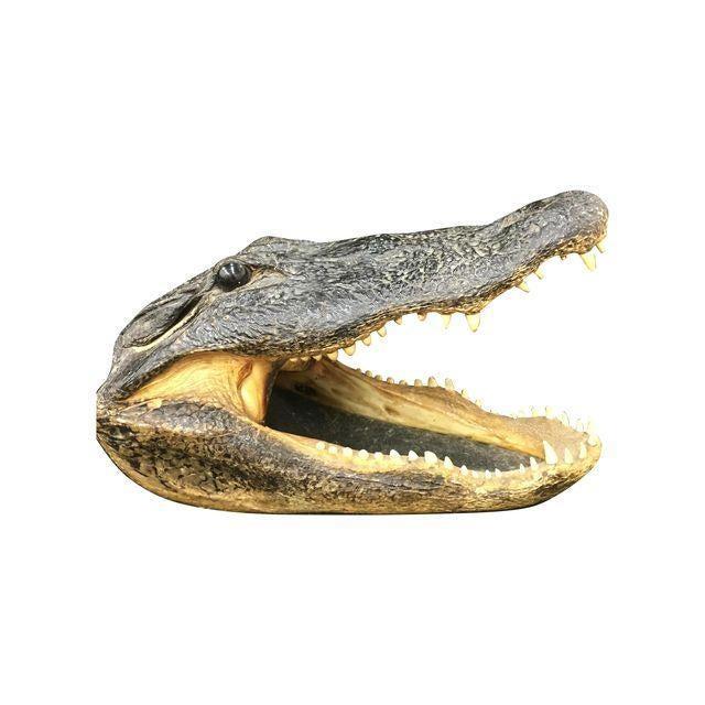 Vintage Taxidermy Alligator Head - Image 1 of 5