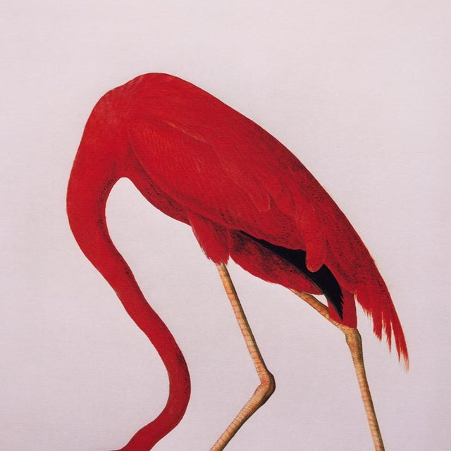 A large reproduction print after a vintage print of the magnificent American Flamingo from Birds of America book by John...