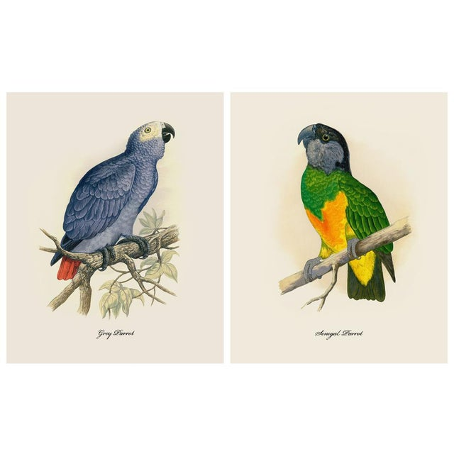 Printmaking Materials 1884 Alexander Francis Lydon, Parrot Reproduction - Set of 12, N2 For Sale - Image 7 of 13