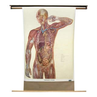 1957 Denoyer Geppert Lymphatic System Pull Down Anatomical Chart For Sale