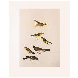 1966 Vintage Cottage Print of Birds of America by John James Audubon For Sale