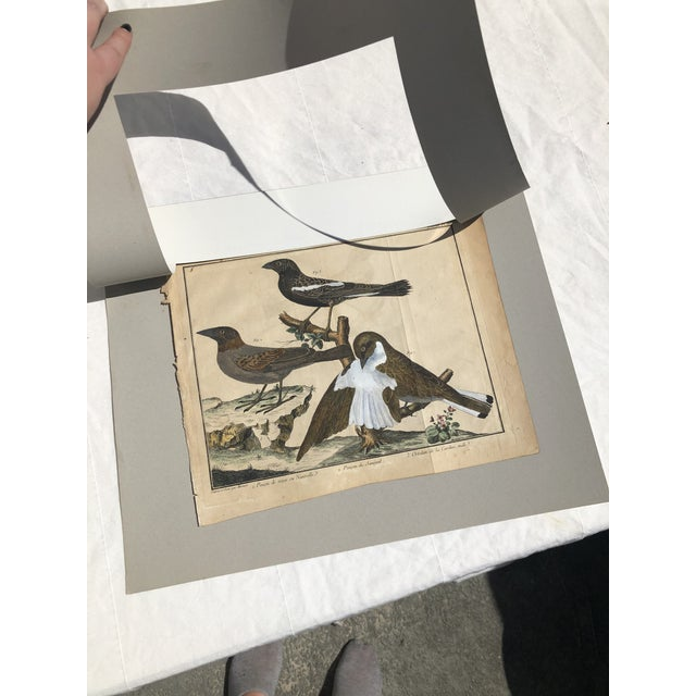 "A matted, hand colored engraving signed ""Martinet,"" originally from the book ""A Natural History Of Birds"" by Eleazar..."