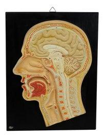 Image of Illustration Curiosities