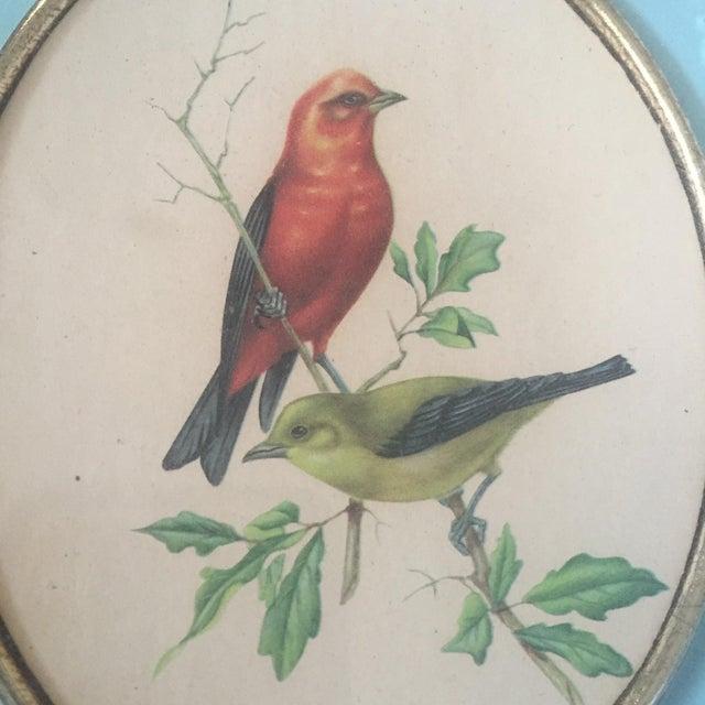 1958 Framed Bird Print - Image 7 of 9