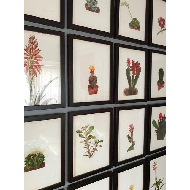 Framed Rock Plants - Set of 32 - Image 7 of 11