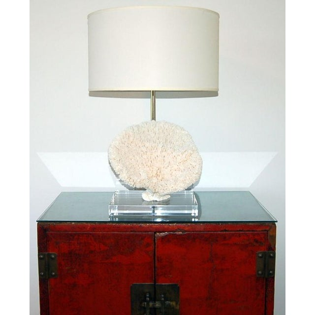 Contemporary Coral Table Lamp on Lucite White For Sale - Image 3 of 6