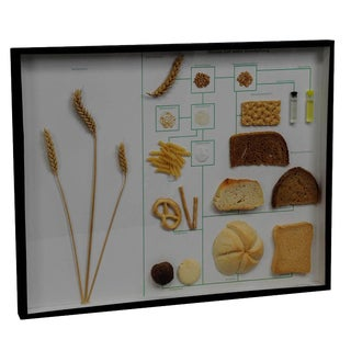 School Teaching Display Corn And Corn Products For Sale
