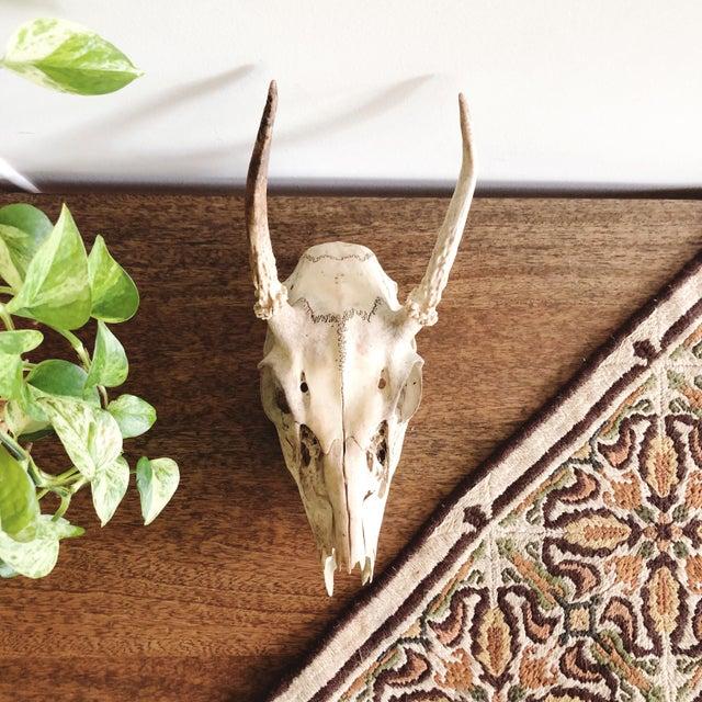 Antler Vintage Deer Skull and Antlers For Sale - Image 7 of 7