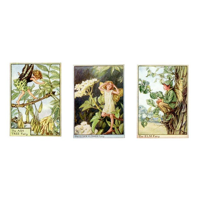 1930s Vintage Flower Fairies of the Trees, Set of 3 Prints For Sale - Image 5 of 5