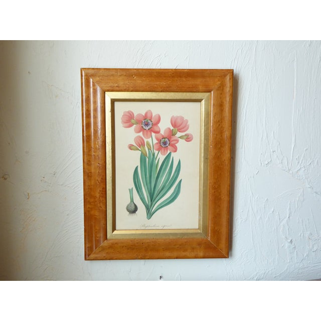Mid 19th Century 19th Century English Spring Flower Print in Maple Frame For Sale - Image 5 of 5