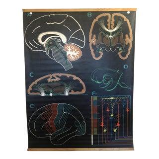 Vintage French Anatomy Brain Poster