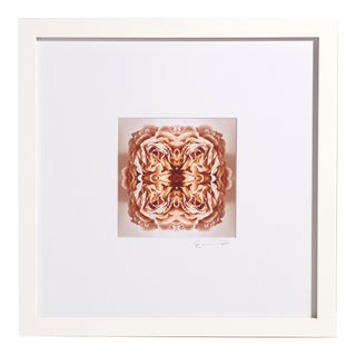 """""""Ancien No. 1"""" Contemporary Botanical Print by Erin Derby, Framed For Sale"""