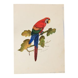 Parrot Marker Drawing by Lisa Burris For Sale