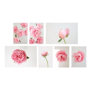 Grace: Pink Peony, 2020' Set of 7 Contemporary Photographs by Claiborne Swanson Frank
