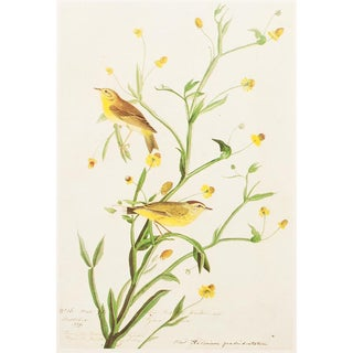 1966 Cottage Lithograph of Yellow Red-Poll Warbler by Audubon For Sale