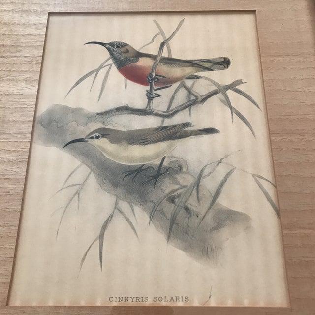 John James Audubon Early 20th C. Framed Avian Prints - A Pair For Sale - Image 4 of 9