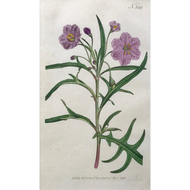 Original Antique Curtis Floral Botanical Etchings C. 1796 - a Pair For Sale - Image 4 of 6