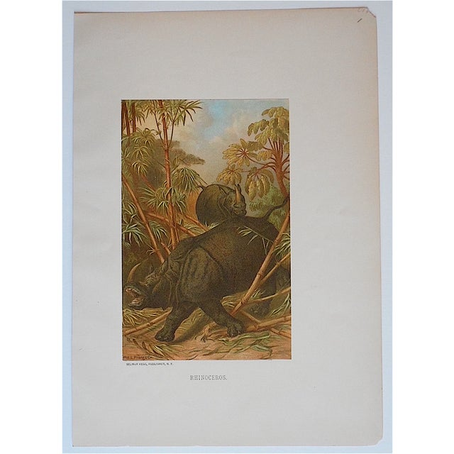 Rustic Antique Animal Lithographs, Rhinocerous For Sale - Image 3 of 3