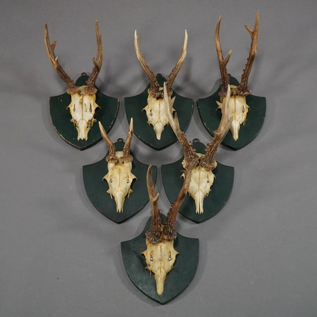 a set of six antique black forest deer trophies on wooden plaques. remaining from the stately home of palace salem in...