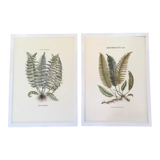 English Botanical Fern Lithographs After Anne Pratt, Framed - a Pair For Sale