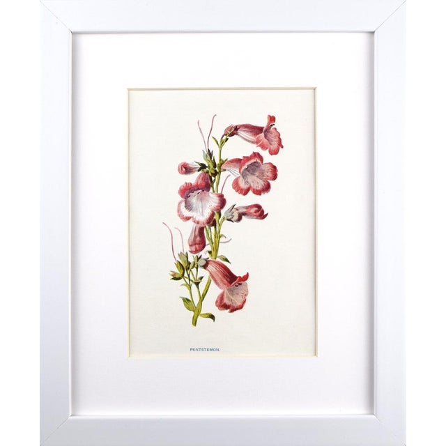 "Set of 6 colorful botanical lithographs Published C. 1900 in London for ""Familiar Garden Flowers"" by F. Edward Hulme &..."