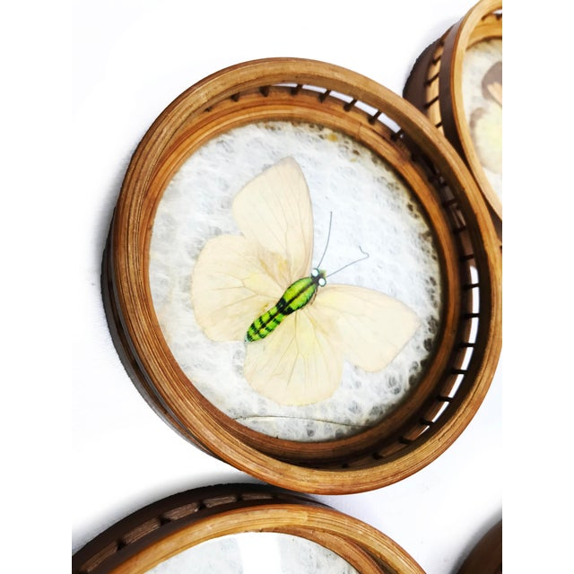 Asian Vintage Wicker Coasters With Real Butterflies - Set of 6 For Sale - Image 3 of 4