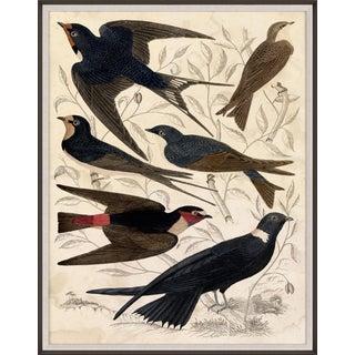 Gallivani Birds 1, Framed Artwork For Sale