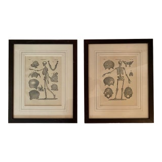 1890 Original Skeleton Anatomy Illustrations - Set of 2 For Sale