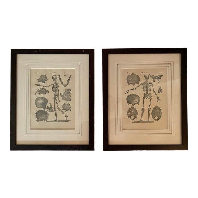 1890 Original Skeleton Anatomy Illustrations - Set of 2 For Sale