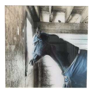 Acrylic Mounted Black Horse Photograph For Sale