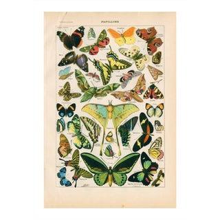 Vintage Butterflies Archival Print For Sale