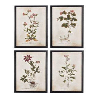 Kenneth Ludwig Chicago Wildflower Illustrations - Set of 4 For Sale