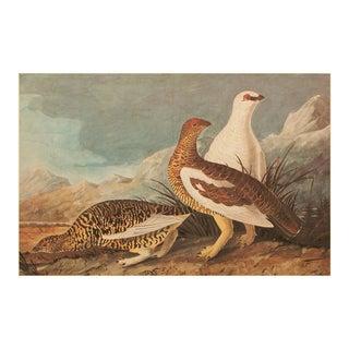 Rock Ptarmigan by John J. Audubon, XL Vintage Cottage Print For Sale