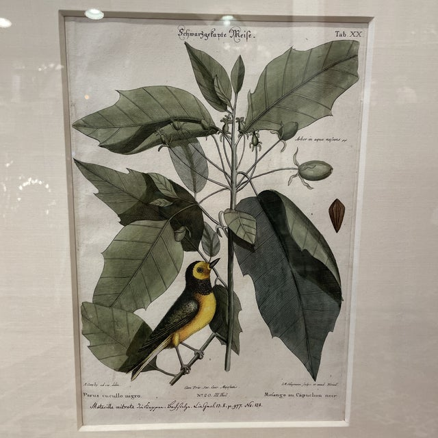 Traditional Mid 18th Century Catesby Botanical and Bird Print, Framed For Sale - Image 3 of 7