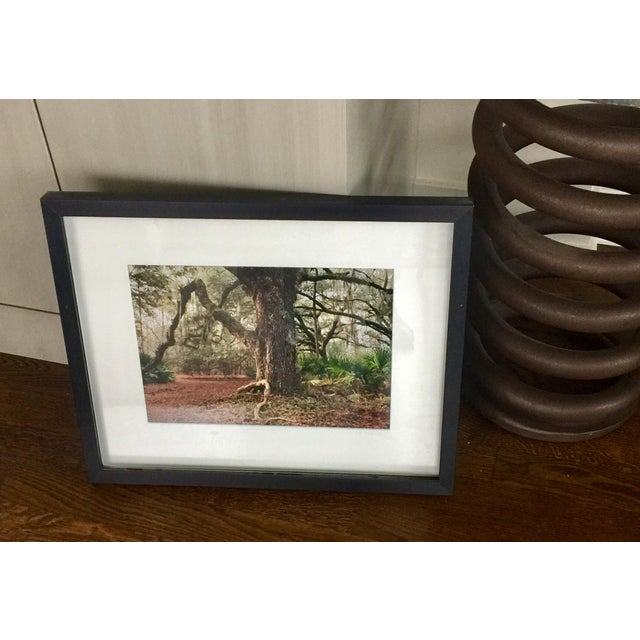 This is a beautiful, peaceful woodland photograph by award-winning Florida-based photographer Laurie Coppedge. This one is...
