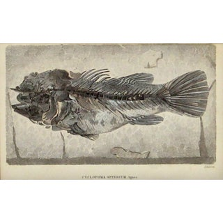 Blue Fossilized Fish Print For Sale