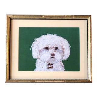 Maltese Dog Print by Contemporary Artist Judy Henn Vintage Bamboo Frame For Sale