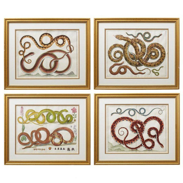 Set of Four Albertus Seba Hand-Colored Snake Prints For Sale - Image 13 of 13