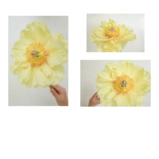 'Rays: Yellow Peony' Set of 3 Contemporary Photographs by Claiborne Swanson Frank