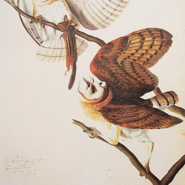 John James Audubon 1966 John James Audubon Barn Owls Lithograph For Sale - Image 4 of 9