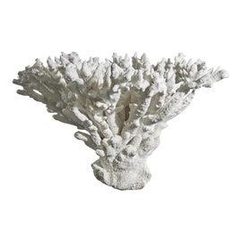 Image of Wood Curiosities