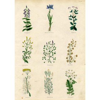 1840s English Herbal Engraving, Including Foxglove For Sale