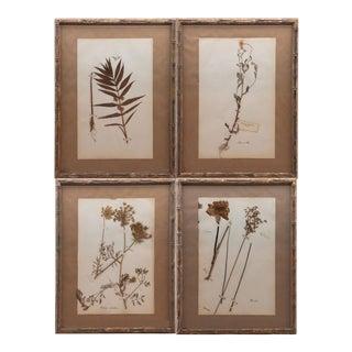 """19th Century Framed and Pressed """"Herbier"""" Botanical Specimens - Set of 4 For Sale"""