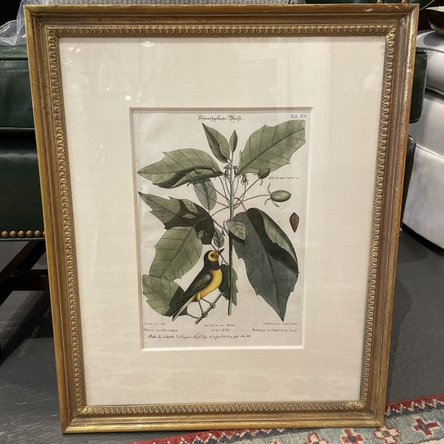 Paper Mid 18th Century Catesby Botanical and Bird Print, Framed For Sale - Image 7 of 7