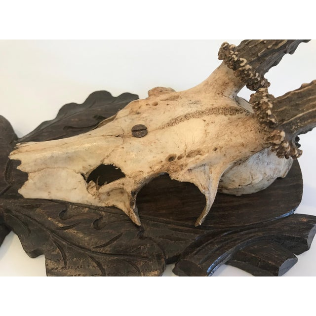 Black Forest Antlers Trophy With Leaf and Branch Decoration on Mount For Sale - Image 9 of 13