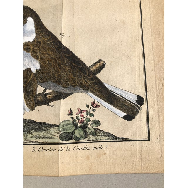 Paper 18th Century French Matted Bird Engraving by Martinet Featuring a Snow Pincer, a Senegalese Pincer and a Carolina Ortolan For Sale - Image 7 of 13