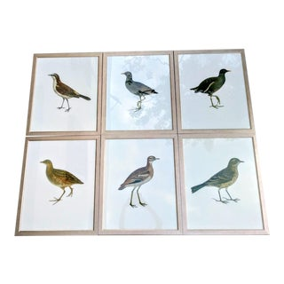 Framed Set of Large Multiple Bird Prints in Silver Frames Set of 6 For Sale