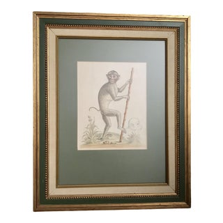 1700's Antique George Edwards Pig Tailed Monkey Hand Tinted Engraving Print - 1960's Frame For Sale